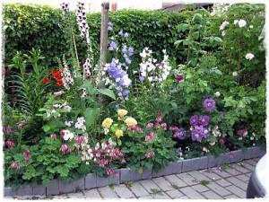 Trädgård2